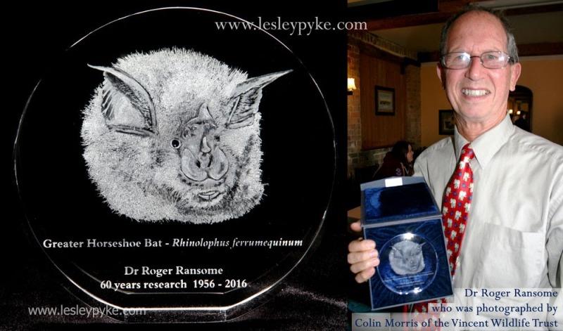 Horseshoe bat Roger Ransome