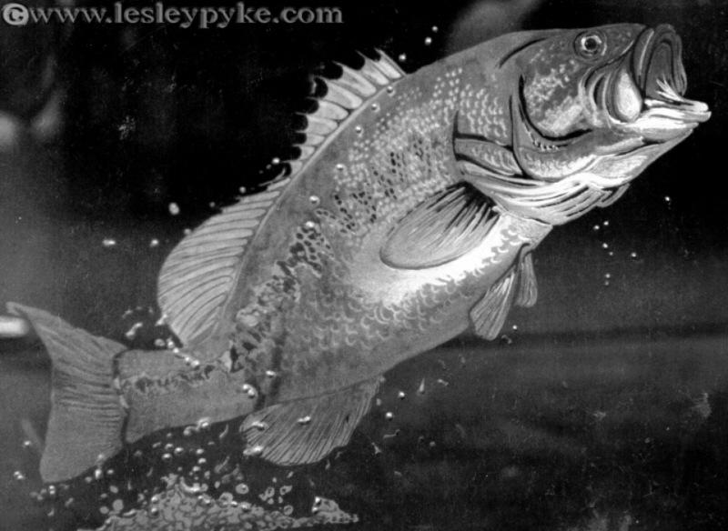African bass