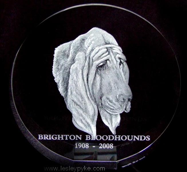 1Bloodhound