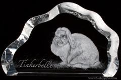 Tinkerbell bunny